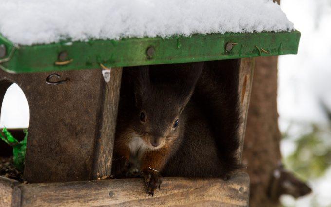 Eichhörnchen Bad Gastein