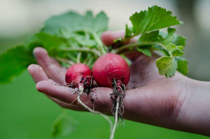 nachhaltiger München Kartoffelkombinat