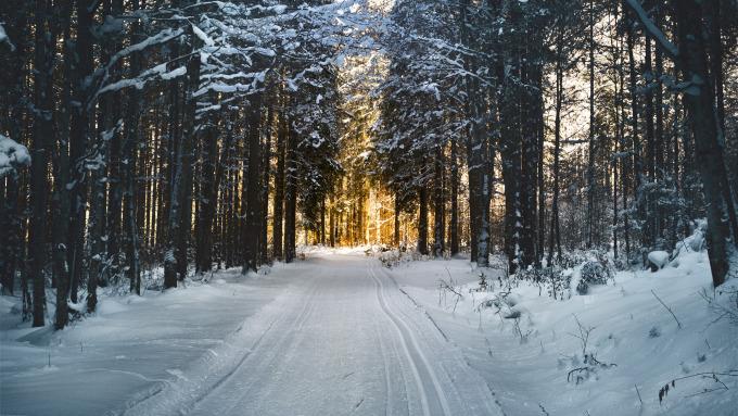 Schlitten Rodeln Winter