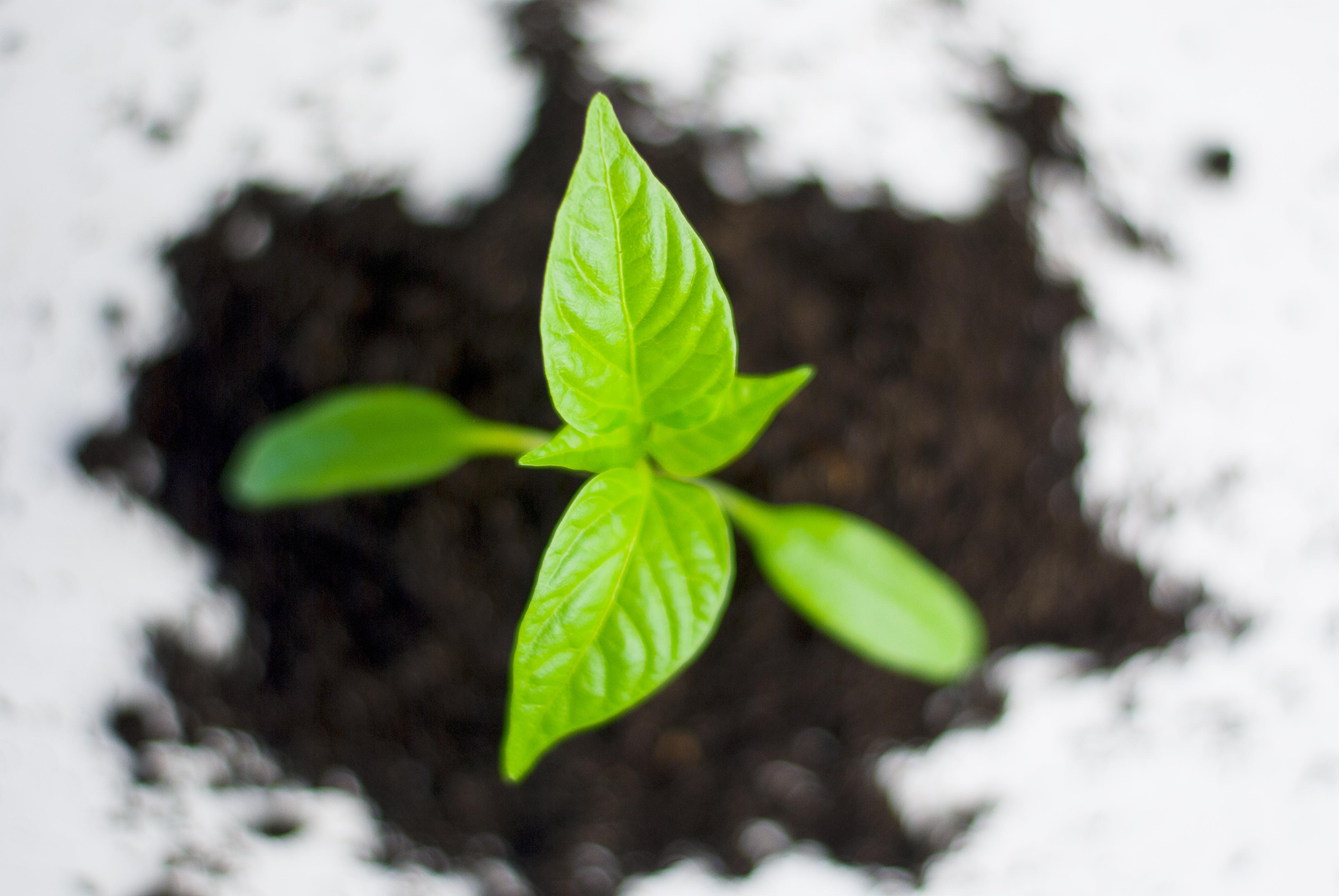 kaffeebaum in nepal mit treedom b ume pflanzen und verschenken mit vergn gen m nchen. Black Bedroom Furniture Sets. Home Design Ideas