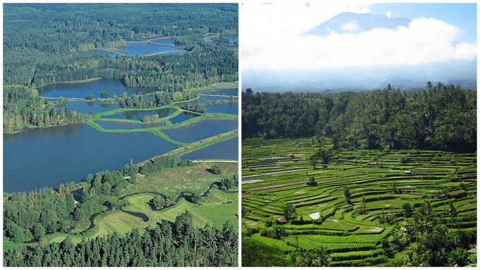 Bali Reisfelder Land der tausend Teiche