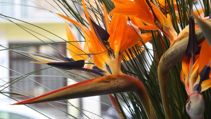 Blütenkorb