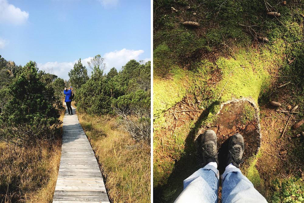 Ausflugsvergnügen: Ein Herbstspaziergang im Murnauer Moos