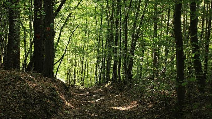 Spaziergänge München Umland Wald Hofoldinger Forst
