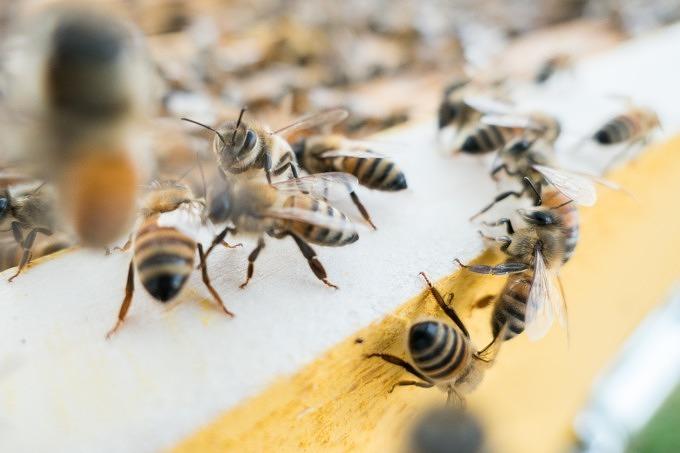 Bienensterben Volksbegehren Artenvielfalt Bienen