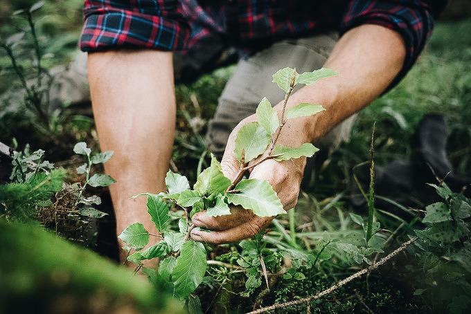 Bergwaldprojekt Initiative klimafreundlich