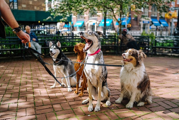 Hund Tierheim