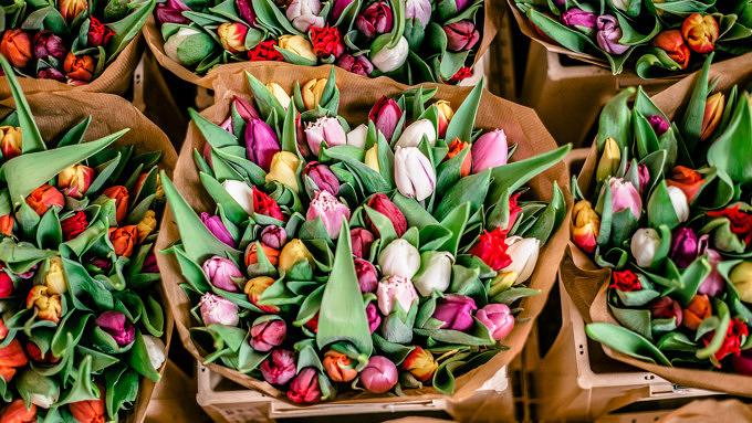 Tulpen Blumen Blumenstrauß