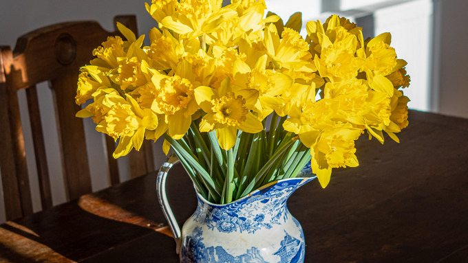 Blumen Ostern Narzissen Vase