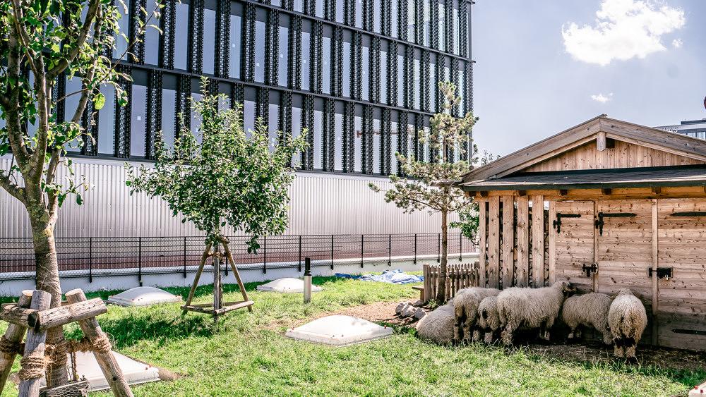 stadtalm werk3 werksviertel schafe