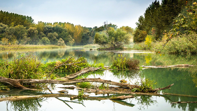 donaualtwasser Donau Naturwanderweg