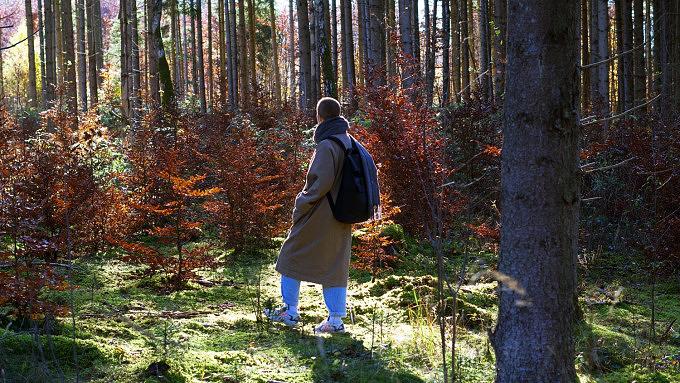 Forstenrieder Park Waldbaden